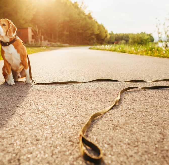 Pet Problems: Are You Prepared?